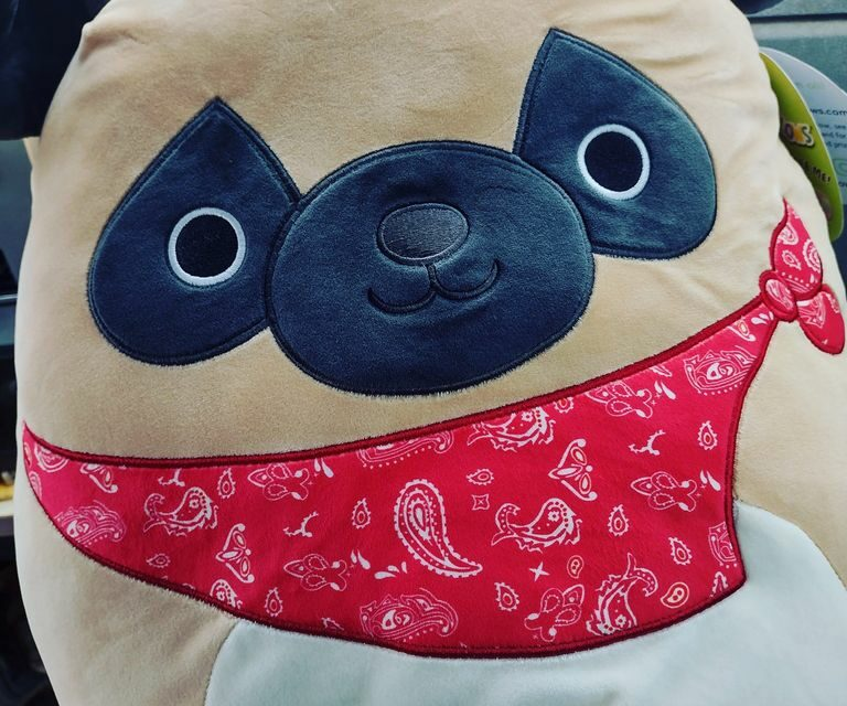 Pug Squishmallows at Costco Now In-Store and Online