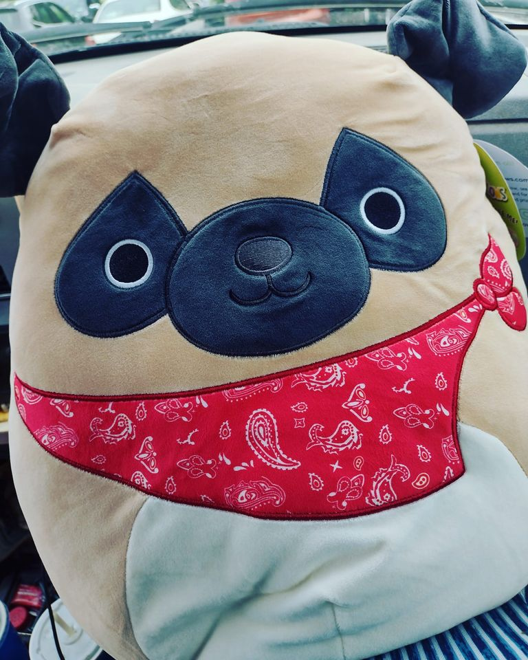 Pug Squishmallows at Costco Now Online and In Stores!